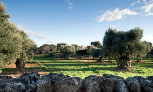 In the heart of Apulia
